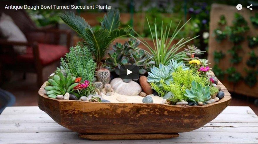 Antieke Deegkom Verandert In Plantenbak Met Succulenten