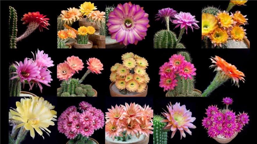 Freaky Flowers