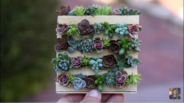 Mini Pallet Van Ijsstokjes Met Succulenten
