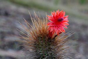 Corona-virus Treft Onze Activiteiten [update 02-04-2020; 17:30 U.]