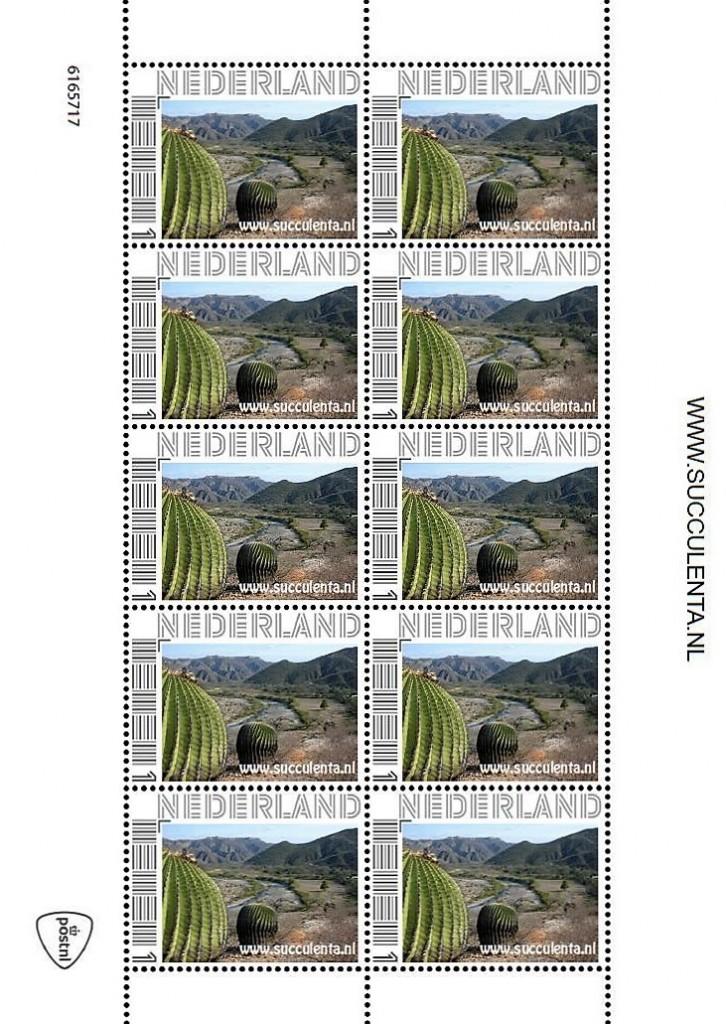 Succulenta Postzegel 2016 1 726×1024