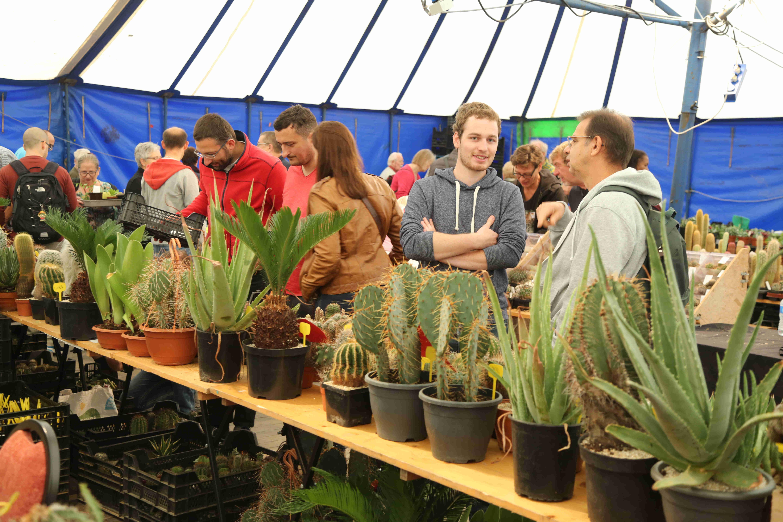 Breed Aanbod Van Succulenten Tijdens Jubileumweekend 15 En 16 Juni