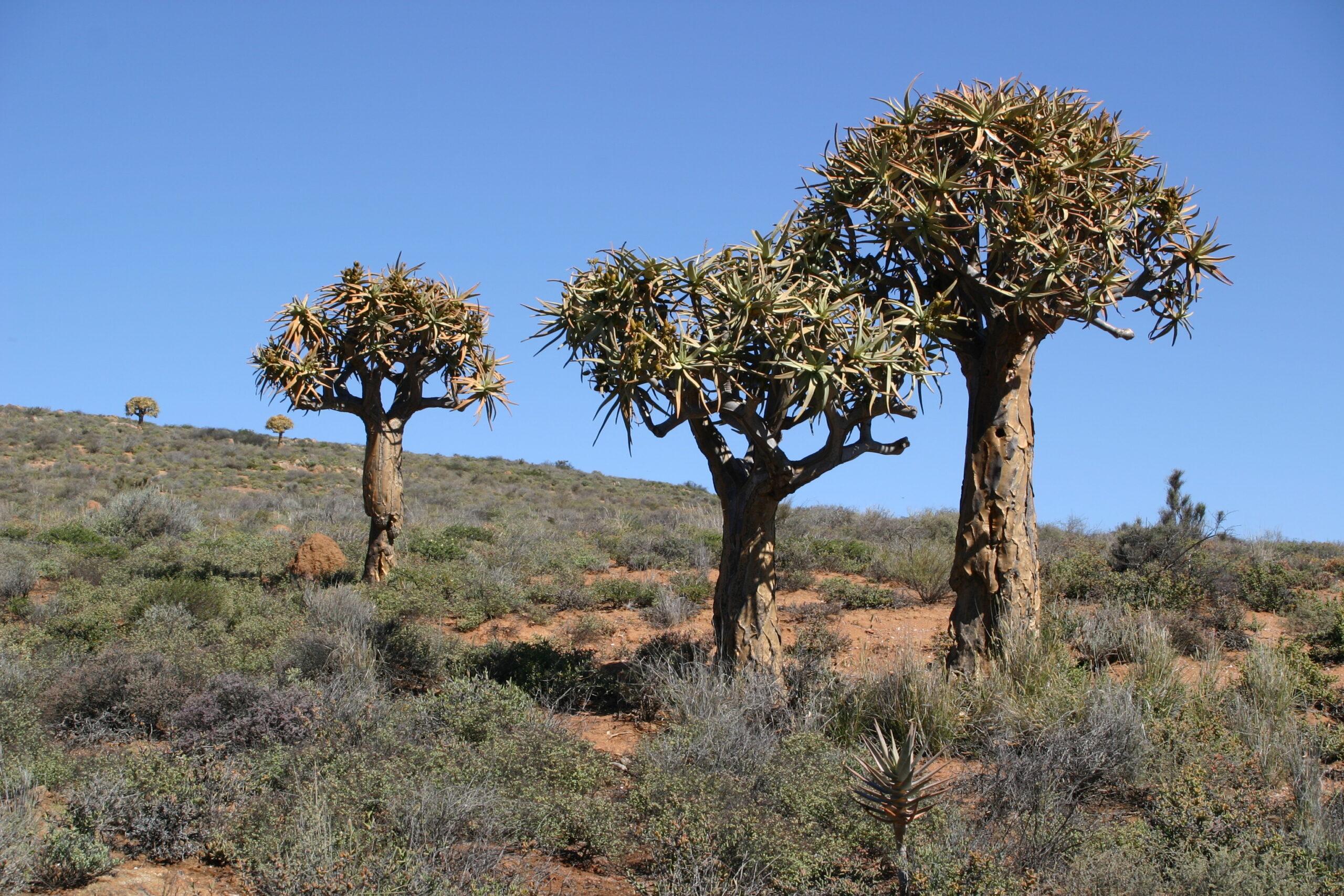 Op Het Verlanglijstje: Namibië